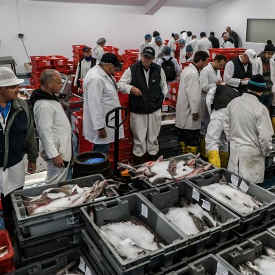 Newlyn fish market (Photo by Laurence Hartwell)