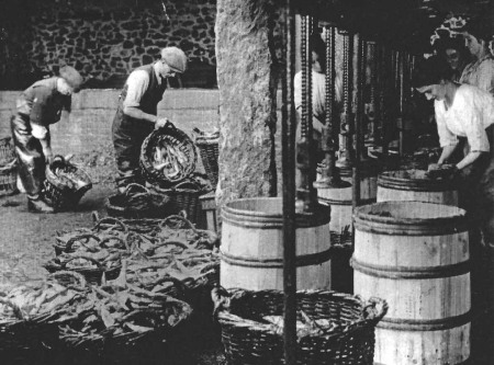 Historic photo of Newlyn pilchard pressing yard (Billy Stevenson Collection)