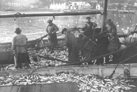 Historic photo of fishermen unmeshing fish in Newlyn Harbour (Billy Stevenson Collection)